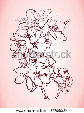 dog rose hand drawn flowers  - stock photo