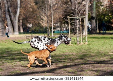 Dog run in the park - stock photo