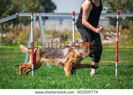 Dog running in agility - stock photo