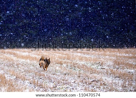 Dog running into the darkness in a snowstorm - stock photo