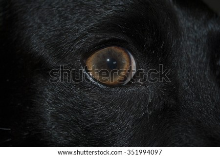 Dog's eye close up