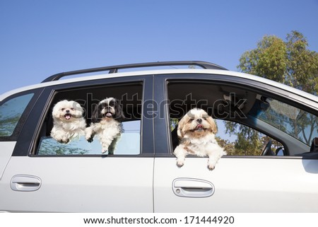 dog's family enjoying in the car  - stock photo