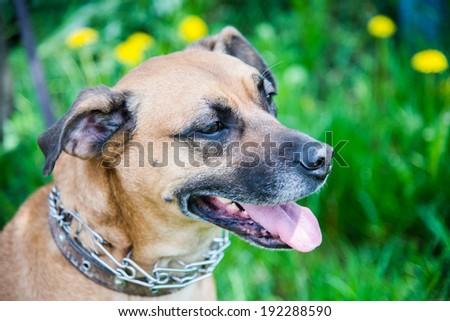 Dog's head in profile - stock photo
