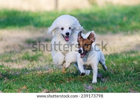 Dog's Life - stock photo