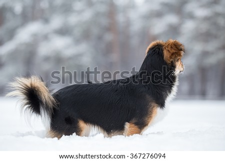 Dog saunters in the winter park. - stock photo