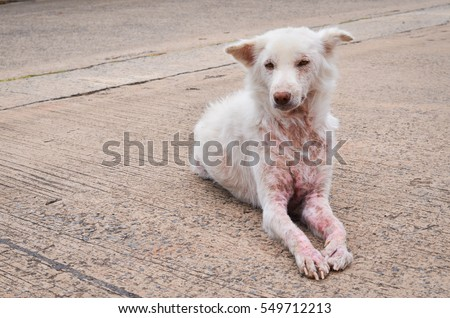 how to kill scabies on dogs