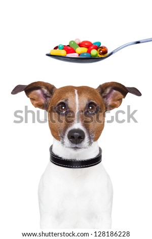 dog scared of a spoon full of pills - stock photo
