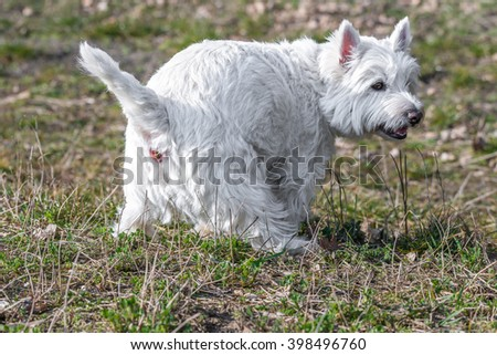 Dog shits poops on a meadow