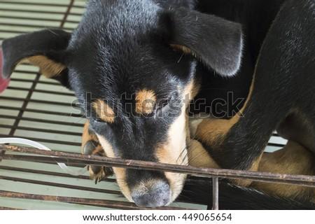 dog sick sleep in cage - stock photo