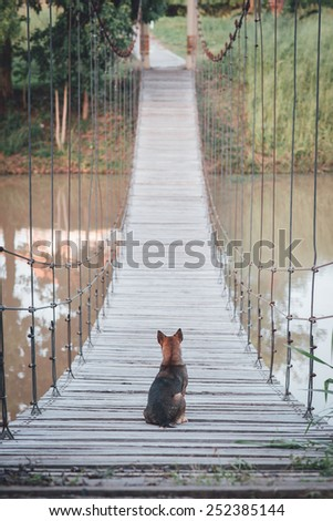 Dog sits on the bridge , feel lonely with vintage filter effect - stock photo