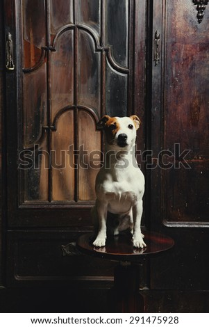 dog sits on wooden retro chair. Vintage dark background interior
