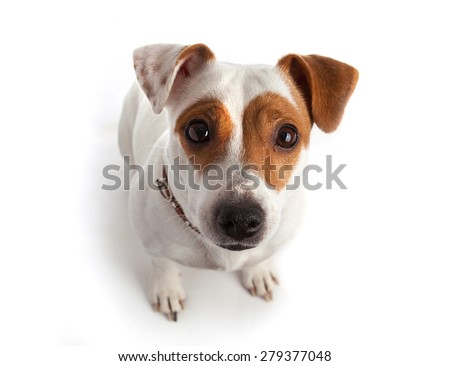 dog sitting in a collar  - stock photo