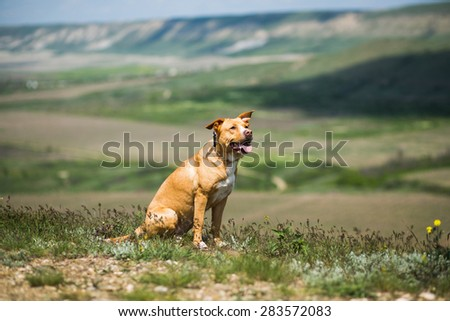Dog sitting in a meadow in the mountains
