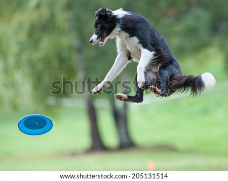 Dog sitting in the air - stock photo