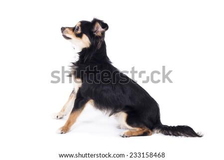 Dog sitting looking left side - stock photo