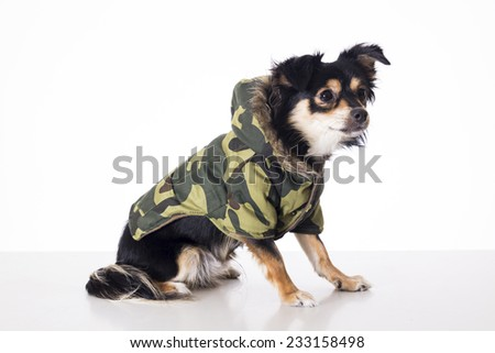 Dog sitting looking left side wearing military jersey - stock photo