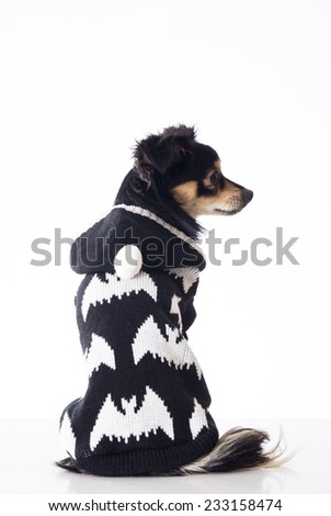 Dog sitting looking right side - stock photo