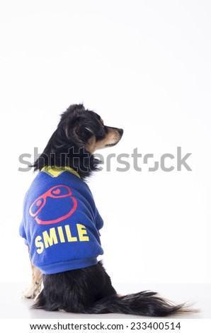 Dog sitting looking right side wearing jersey - stock photo
