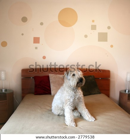 Dog sitting on a bed in modern bedroom - stock photo