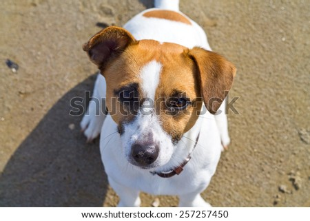 Dog sitting on the beach - stock photo