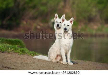 dog sitting on the beach - stock photo