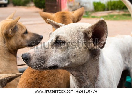 dog sitting on the motorcycle going to travel - stock photo