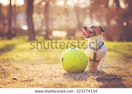 Dog sitting with big ball at park - stock photo