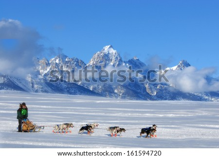 Dog Sled Team running through the mountains - stock photo