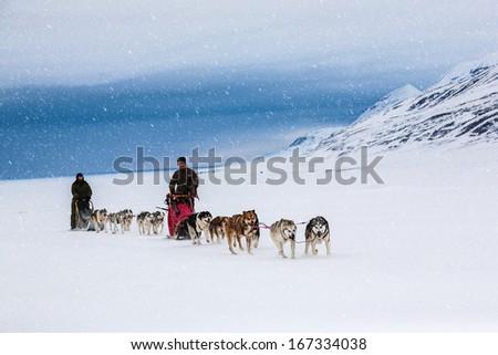 Dog sledding on a wintry Landscape, Arctic North Pole, Svalbard.  - stock photo