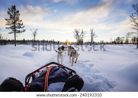 Dog sledding with huskies in beautiful sunset - stock photo