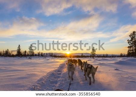 Dog sledding with huskies in beautiful sunset - stock photo