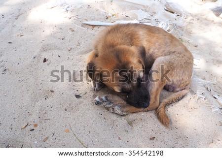 dog sleeping - stock photo