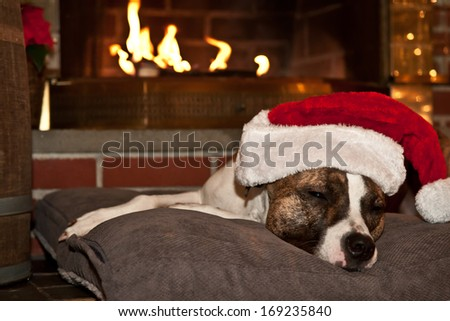 Dog sleeping by the fire - stock photo