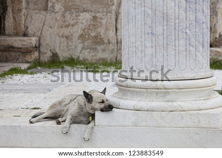 dog sleeping in an ancient temple