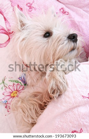 Dog sleeping on a bed .