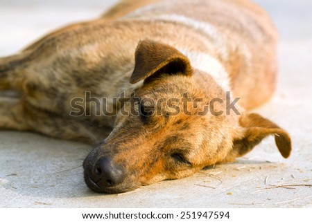 Dog sleeping on the road - stock photo