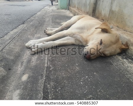 Dog sleeping on the roadside