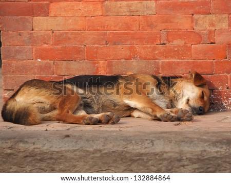 dog sleeping on the street near red brick wall - stock photo