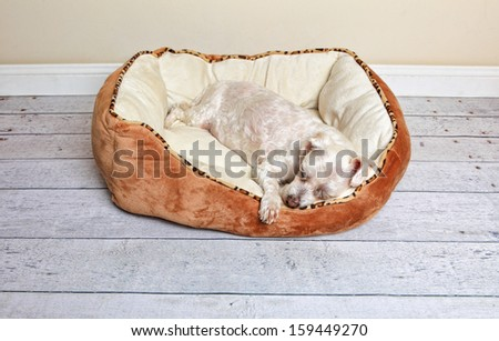 Dog sleeping or napping in a soft and comfy dog bed - stock photo