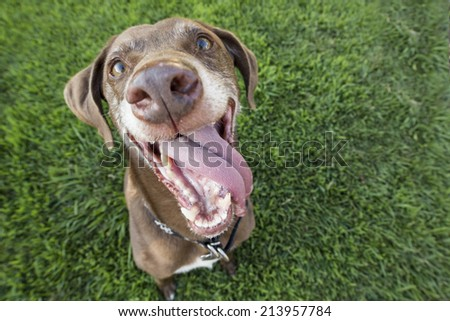 Dog smiles  - stock photo