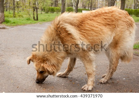 dog sniffing something on the road in the park - stock photo