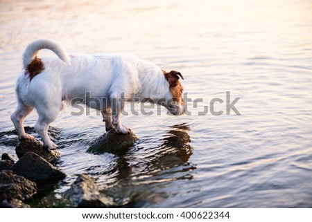 Dog sniffing water. Background for 404 error (not found page) - stock photo