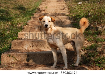 Dog standing - stock photo