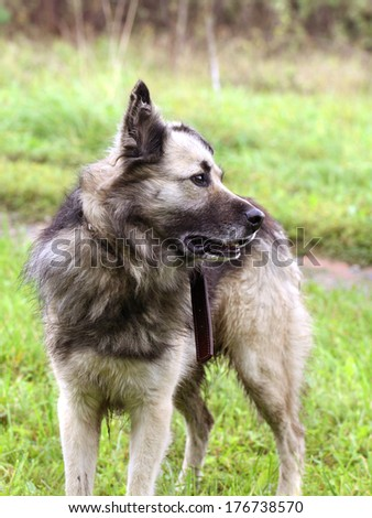 Dog standing on a green grass - stock photo