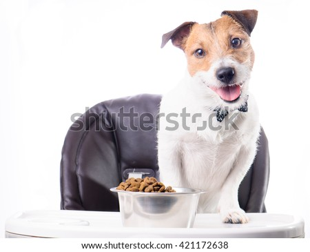 Dog standing on baby table eating dry food