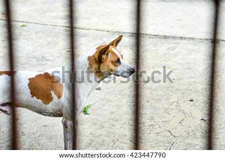 Dog standing with concrete floor background and unidentified house fence foreground