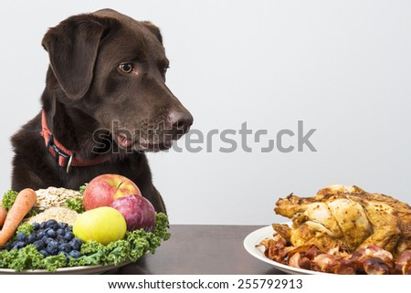 Dog staring at meat products