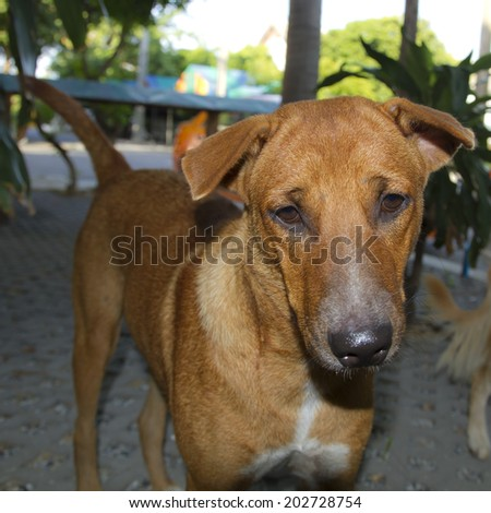 Dog staring - shallow depth of field - stock photo