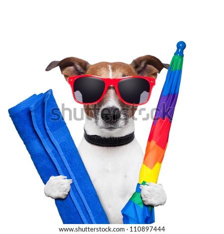 dog summer holidays umbrella and towel - stock photo