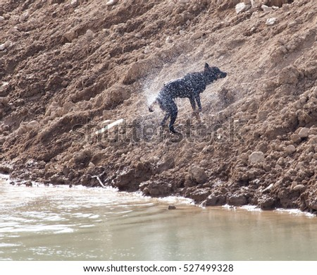 Dog swims across the river